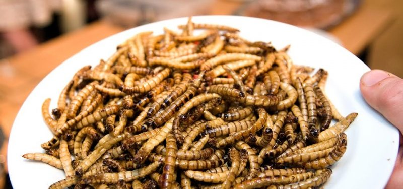 Hmyz na talíři